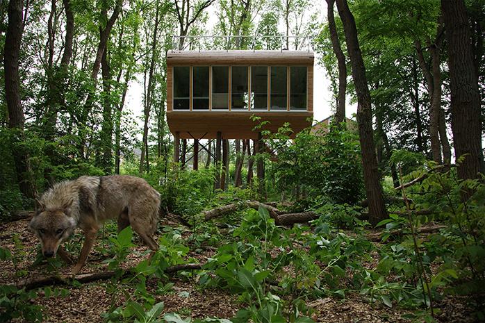 Wild Campen im Baumhaus