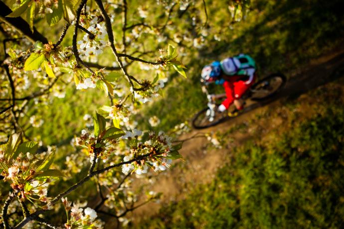 Mountainbiker-Wald-Churfranken