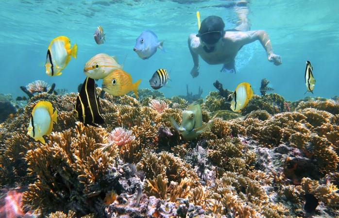 Ein Mann schnorchelt zum Korallenriff in der Nähe der Catalina-Inseln.